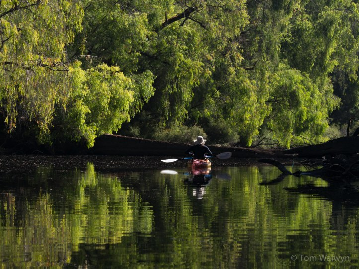 Warren River - not a place to hurry - just absorb and drift, while I fit paddle strokes in between pictures