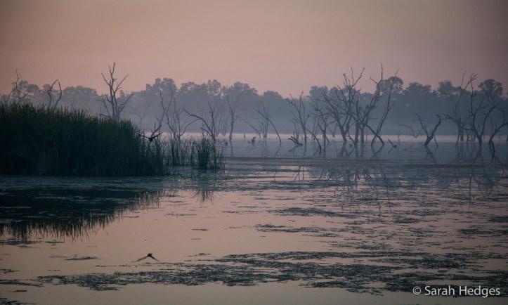 Dawn light at Kununurra Caravan Park befor a long drive isn't so bad