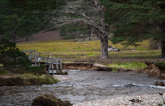 A washed out bridge at Derry Lodge